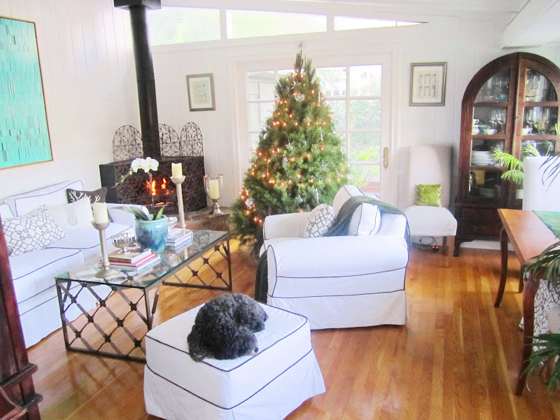 Christmas tree in a living room with wood floor, white sofa, armchair and ottoman with navy piping, a coffee table with iron legs and a glass table top, and a black fireplace