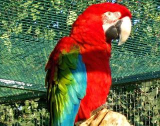 Αποτέλεσμα εικόνας για ο ταβερνιαρης και ο παπαγαλος