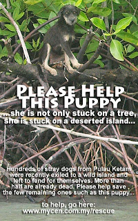 Time & Tide Wait For No Dog: An Appeal To Rescue Castaways On Dog Island