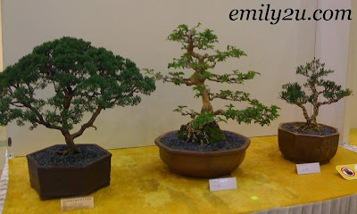 Bonsai & Suiseki Exhibition @ Kinta City [Bonsai]