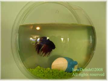green challenge siamese fighting fish tank