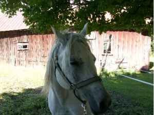 Craigslist free horse ads that piss me off the first ad vt - Craigslist greenville farm and garden ...