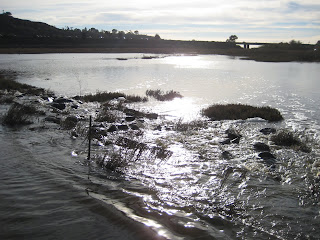 View of Interstate 5 from San Elijo Lagoon