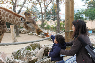Léo dando folhinha para a girafa no Zoológico de Lisboa