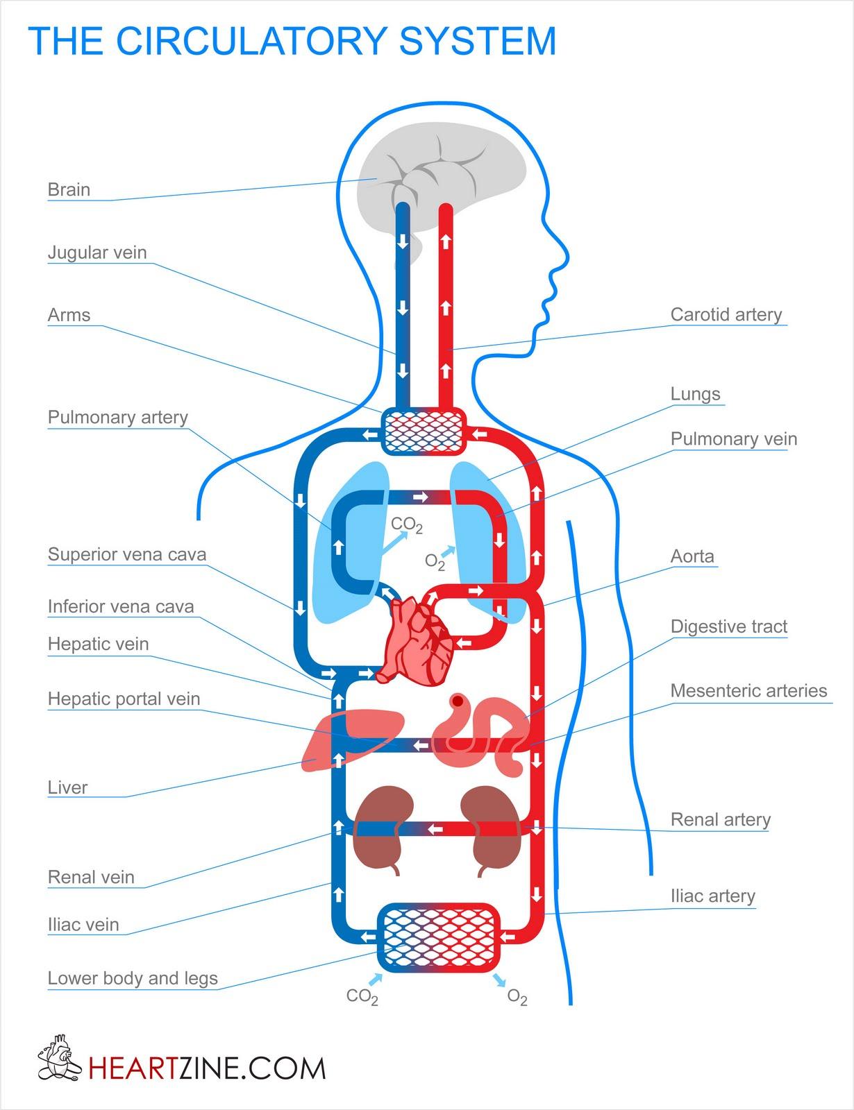 Cardiac and Respiratory: June 2010