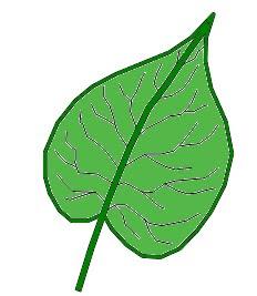 Acorazonada plantas riomoros for Definicion de plantas ornamentales