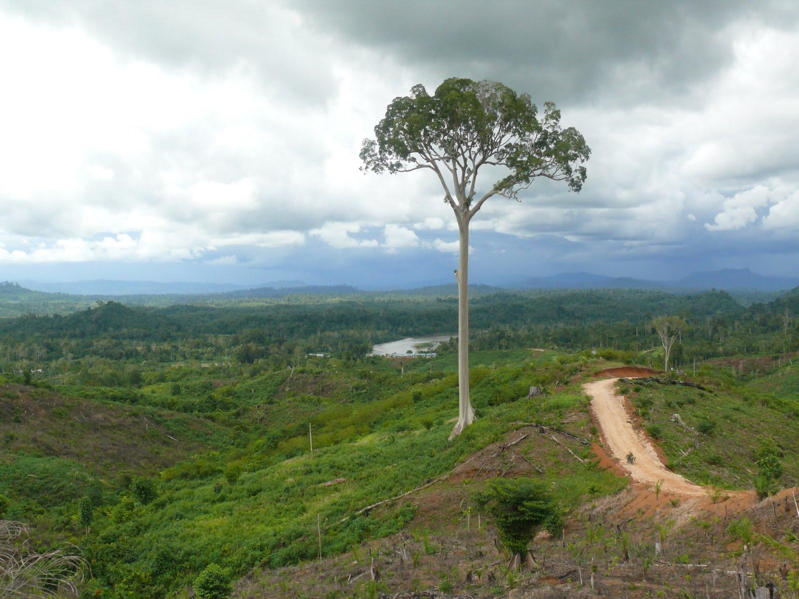 %name Tidak Diperlukan Investasi HTI Dalam Rehabilitasi Kawasan Hutana Oleh PT. Sumatera Sylva Lestari Sebab Tidak Menjalankan Amanah Menjaga Aset Negara DI Bumi Padanglawas Sumut
