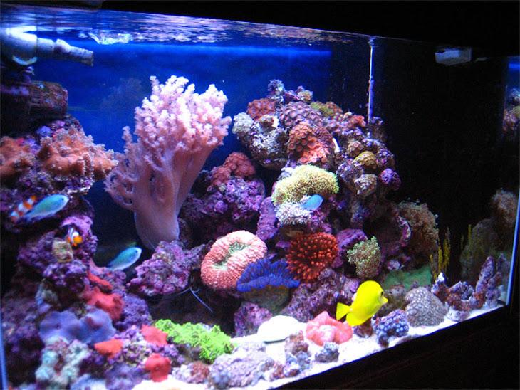 Marine Aquarium Memelihara Ikan Hias Laut