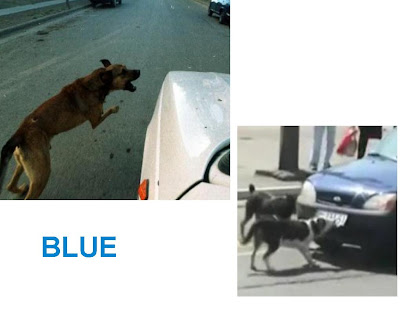evitar que  un perro persiga autos