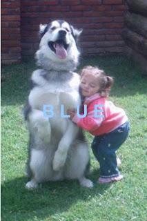 Cómo elegir y cuidar un perro