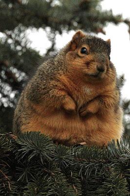 Animais gordos 3