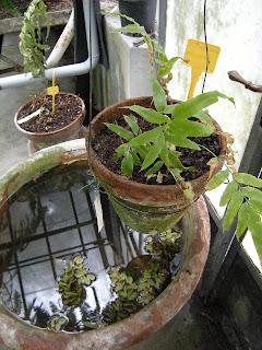 le jardin de la poupe orto botanico di Genova