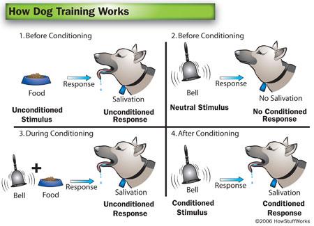 Moving To Islam Palvlov\u0027s experiment - Classical conditioning - examples of classical conditioning