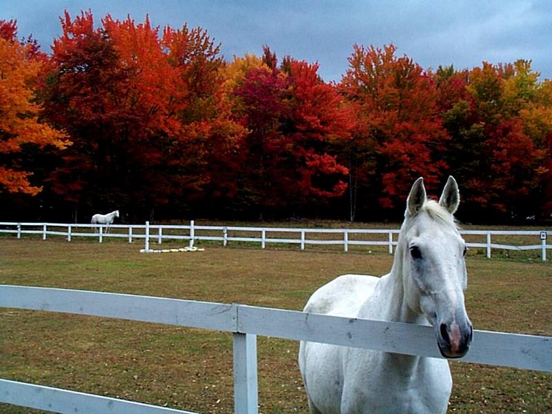 Frases Bonitas Com Imagens De Cavalos