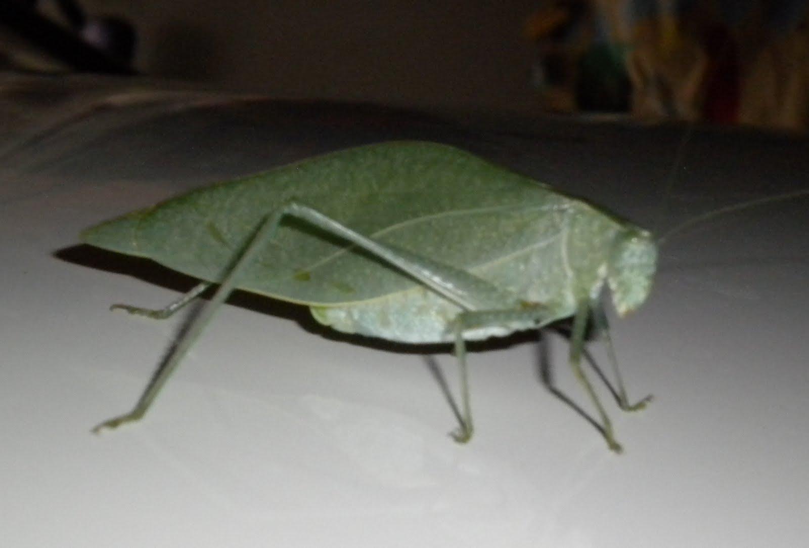 FuchsiaStars® LunarNotes: ☆♥*♥☆ Leaf Insect Wisdom ☆♥*♥☆