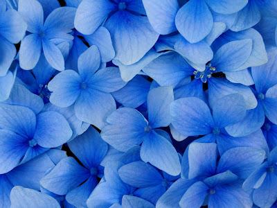 artful flowers wallpapers free download  flower photography, Beautiful flower