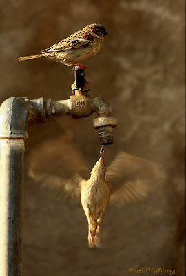 Free Download Cute Girl Wallpaper Thirsty Bird Amazing Shot Amazing Birds Wallpaper