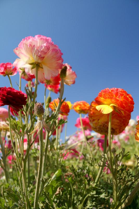 Victoria S Flowers Warren Rhode Island