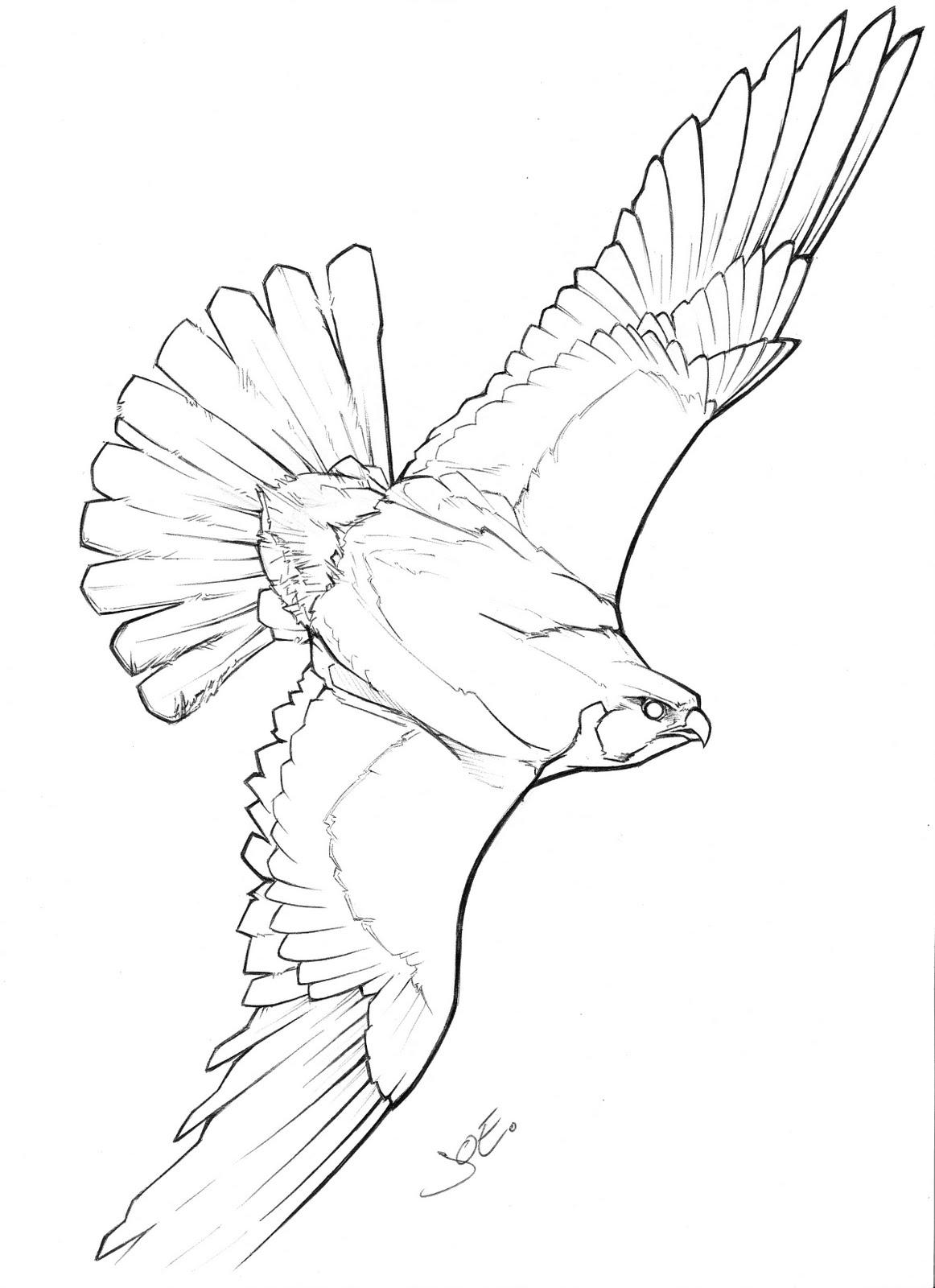 Falcon Bird Outline