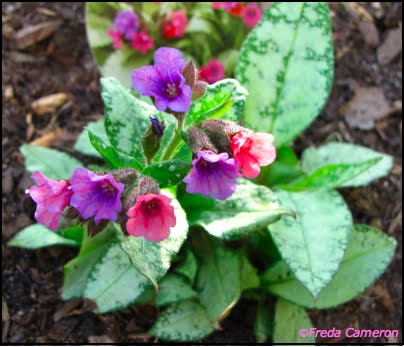 Defining Your Home Garden And Travel A Pink And Purple