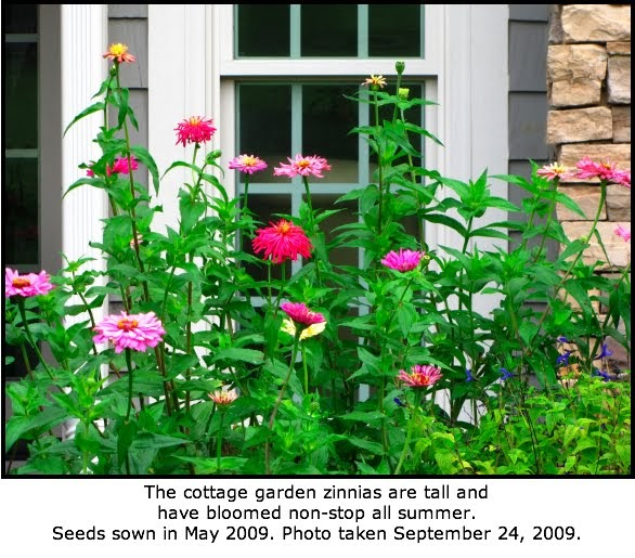 Defining Your Home, Garden And Travel: Are Zinnias Deer