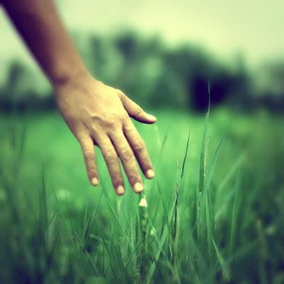 Risultati immagini per filo d'erba al vento