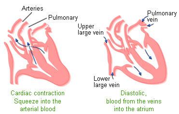 heart-function-image-description
