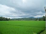 Sepenggal Cerita Seputar Kunjungan Presiden Soekarno ke Desa Ngadagan Kacamatan Pituruh Tahun 1947