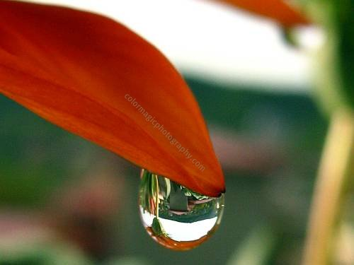 Reflections in raindrop-macro