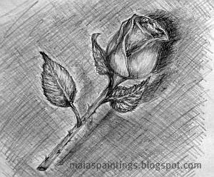 Single rose-pencil drawing