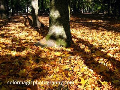 Shadows and lights on autumn leaves