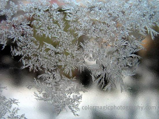 Ice flowers-window frost pattern
