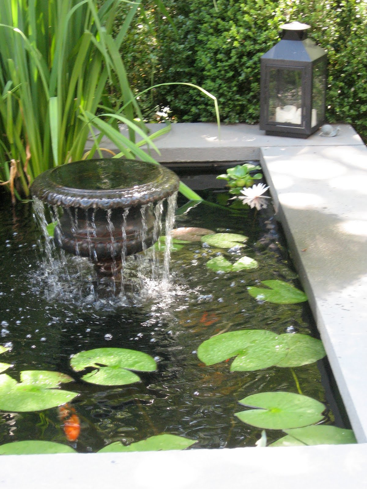 Monkey Grass Hill: It's Getting Hot Out There on Front Yard Pond  id=52596