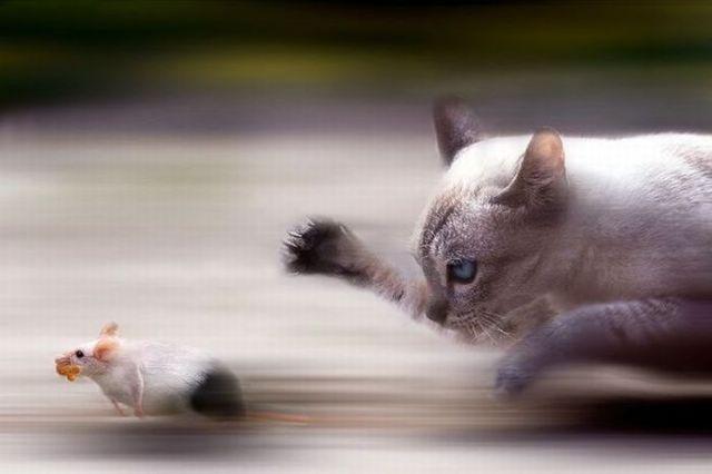 ما أجمل السرعة حين تعجز عينك عن متابعتها, هنا صور جميلة جداً لصور في وسط السرعة