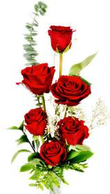 Red Rose to express love on St Valentine Day