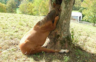 horse stuck in a tree
