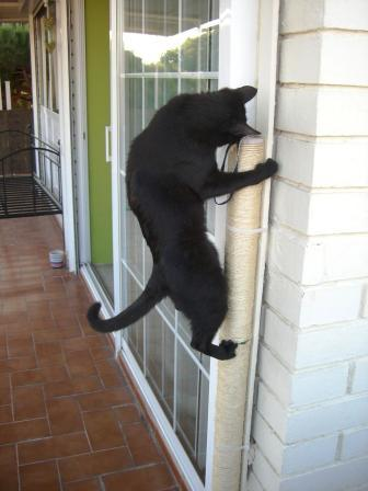 Cogiendo a una gata amateur veracruz - 1 1