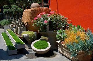 idei simple gradina, magazin jardiniere muschi, sagina subulata, gradina peisagist bucuresti