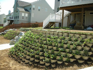 boltari zid de sprijin, boltari plantare plante, gradina in panta, terasare gradina, peisagsitica, design, proiect, inginer stabilizare