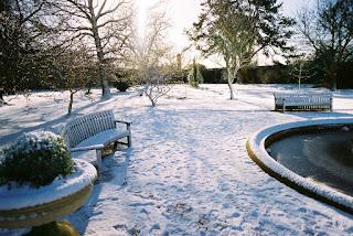 gradina iarna, decor in sezonul rece, curte iarna