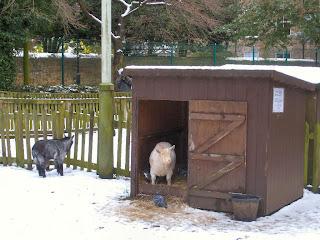 Jesmond Dene Pets Corner