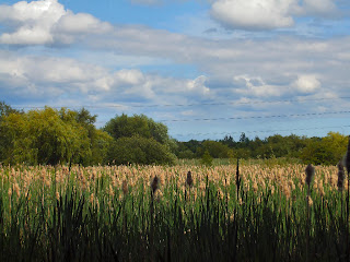 Shibdon Pond Nature Reserve