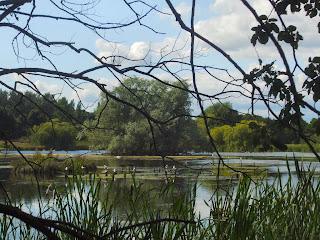Shibdon Pond Nature Reserve