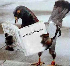 Report a Found Pigeon In Canada
