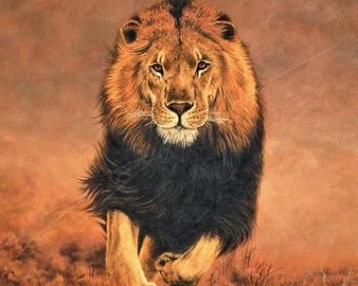 best of wild animal
