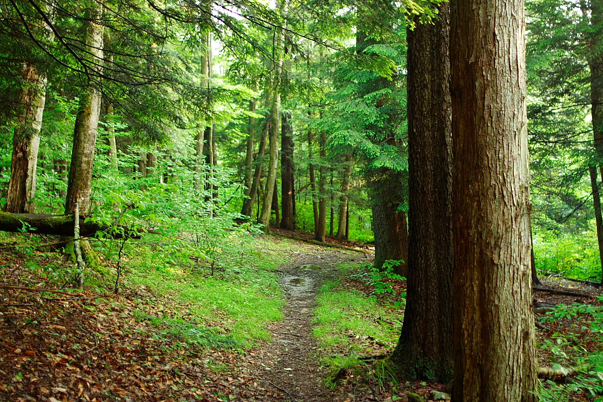 Soothing Peace Of Mind Nature Pictures Forests