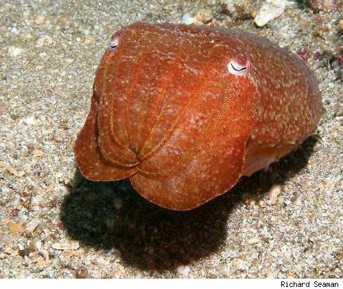 Coolpics 15 Cool Octopus