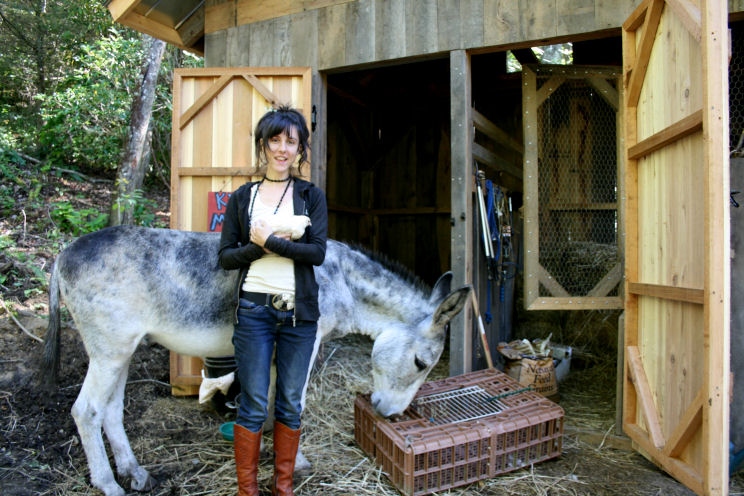 The Öko Box: New Chickens & Donkey Chaos! (Will the baby live?)