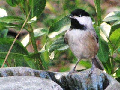 BirdsEyeViews: Winter Backyard Birds