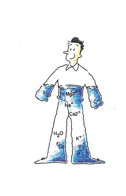 Metabolisme Pakan Pada Ternak Ruminansia